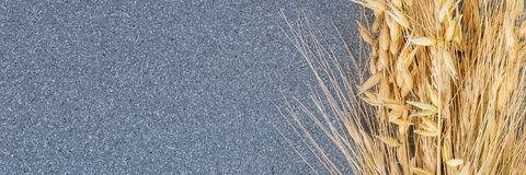 Brightly ears of wheat and barley on the background of gray granite. royalty free stock image