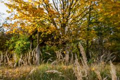 Brightly grated yellow maples and trees. Under sun royalty free stock image