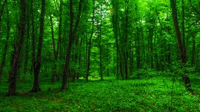 Brightly green forest. Summer time stock image