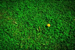 Brightly green spring meadow, abstract photo Royalty Free Stock Photos