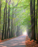 Brightly lit forest lane. Forest lane is brightly lit by sun rays Royalty Free Stock Photography