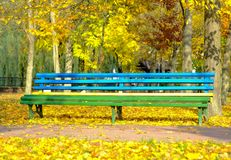 Brightly painted a bench in an autumn park. Beautiful autumn background royalty free stock photo