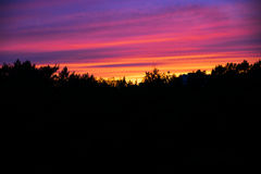 Brightly painted sky above the forest Royalty Free Stock Photo