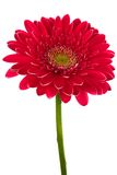 Brightly red flower stock photography