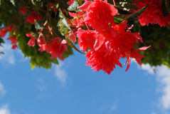 Brightly red flower background Stock Photography