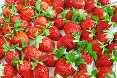 Brightly red juicy and ripe strawberry Stock Image