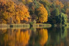 Brightly yellow and green trees near the pond, reflection in water a little swam because of the weak wind, autumn forest. Brightly yellow and green trees near Stock Photo
