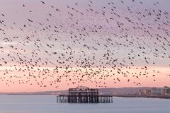 Brighton ögongodis arkivfoto
