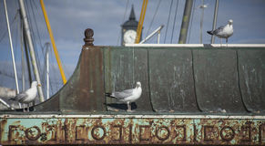 Brighton, Angleterre - mouettes image stock