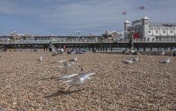 Brighton, Angleterre - mouettes sur la plage Brighton Pier images stock