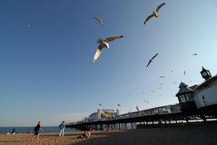 Brighton Beach Royalty-vrije Stock Foto