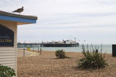 Brighton Beach and pier. Sussex. UK Royalty Free Stock Image