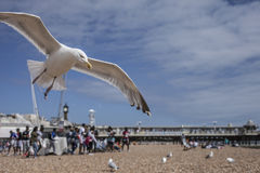 Brighton, beach, seagulls. This image shows some seagulls on a beach in Brighton, England. It was taken on a sunny day in August 2017 royalty free stock photo