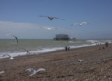 Brighton beach, seagulls and the old pier on a sunny day. Stock Image