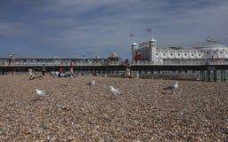 Brighton, Engeland - zeemeeuwen en de kiezelstenen van Brighton Pier /the Stock Foto's