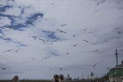 Brighton England - seagulls i luften Arkivfoton