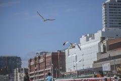 Brighton, gaviotas y los edificios Imágenes de archivo libres de regalías