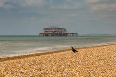 Brighton, Oost-Sussex, het UK Royalty-vrije Stock Foto's