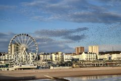 Brighton pirhjul Arkivfoton