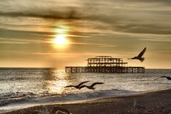 Brighton pirseagulls Royaltyfria Foton
