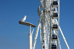 Brighton's Big Wheel Royalty Free Stock Photos