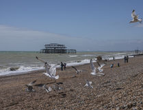 Brighton, seagulls and the old pier. Royalty Free Stock Images