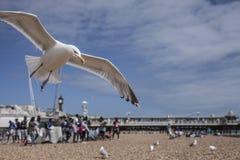 Brighton, strand, zeemeeuwen royalty-vrije stock foto