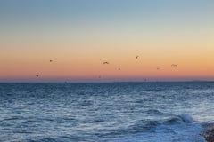 Brighton Sunset stockbilder