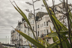 Brighton town - buildings/plants. This image shows a beach in Brighton, England with some people walking and chilling Stock Images