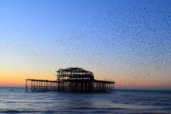 Brighton West Pier no por do sol imagens de stock royalty free