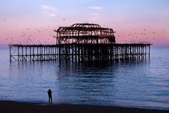 Brighton West Pier på solnedgången med fåglar som flyger rundan det Royaltyfria Foton