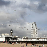 The Brighton Wheel Royalty Free Stock Photo
