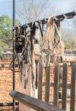 Briglie del cavallo Fotografia Stock Libera da Diritti