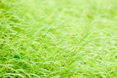 Brigt spring grass background Royalty Free Stock Photo