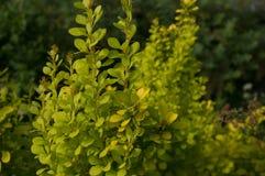 Brigth green Royaltyfria Foton