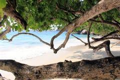 Brigth strand i Thailand Royaltyfri Fotografi