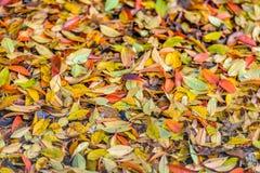Brigtly上色了在地面上的下落的叶子从关闭 库存照片