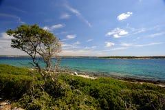 Brijuni Park Narodowy (Chorwacja) Fotografia Stock