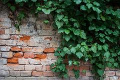 Brick wall with some greenery stock image