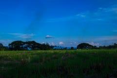 Brilhante de prado Foto de Stock