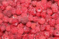 brilhante suculento raspberries selvagem Floresta fotos de stock