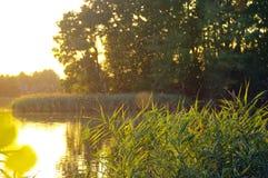 Brilhar insetos sobre o lago cobre durante o por do sol Imagens de Stock Royalty Free