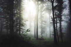 Brilho claro através das árvores na floresta misteriosa com névoa Imagens de Stock Royalty Free