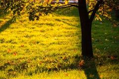 Brilho claro dourado à silhueta da grama e da árvore Fotografia de Stock