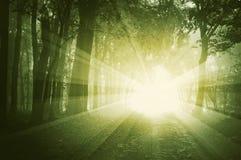 Brilho claro em uma floresta com névoa no por do sol Fotos de Stock