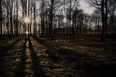 Brilho de Sun em mais forrest Imagem de Stock