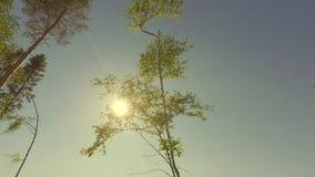 Brilho de Sun entre partes superiores da árvore de floresta panorama de seguimento Baixo-angular filme