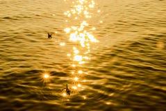 Brilho do sol imagens de stock