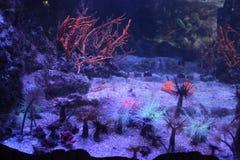 Brilho e fundo do mar imagem de stock