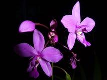 Brilho na noite escura Imagens de Stock Royalty Free